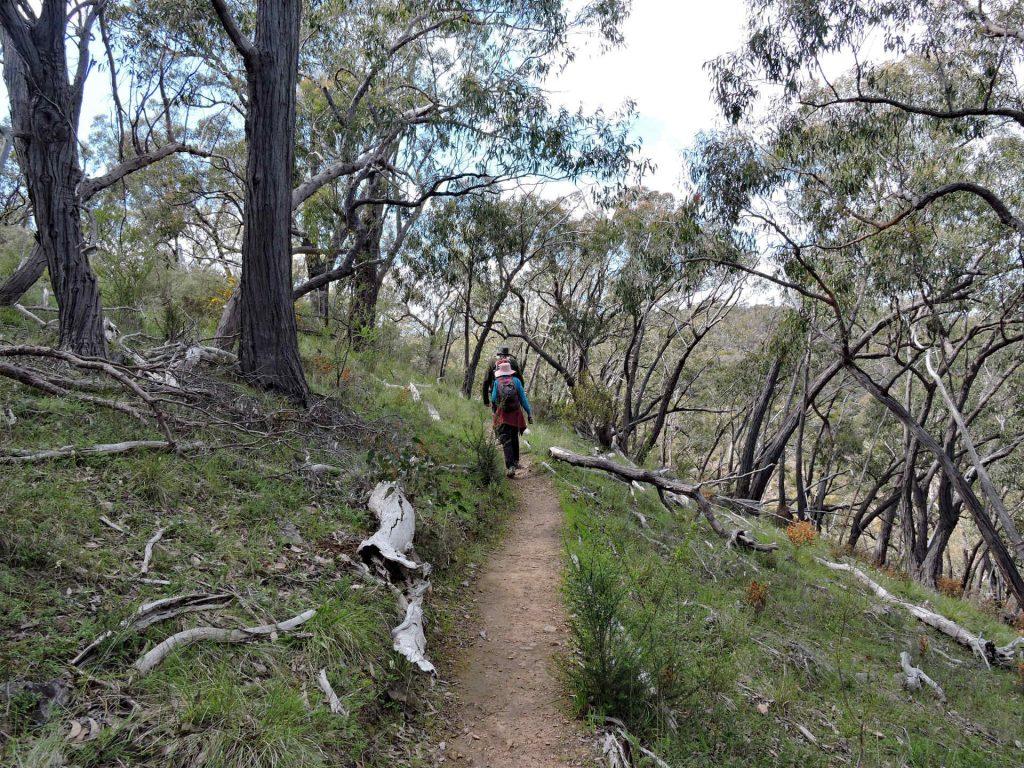 Lavender Federation Trail - 03 Spring Gully Cascades Trail