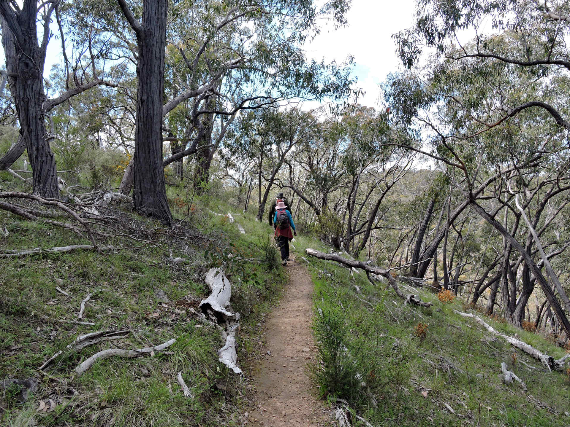 03 Spring Gully Cascades Trail