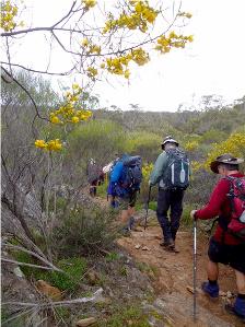 Lavender Federation Trail - A delightful walk through the woodland arboretum - Monarto