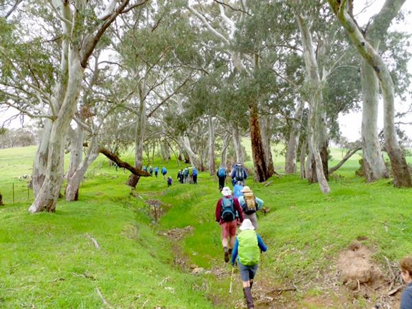 Lavender Federation Trail - Following a grassy easement near Keyneton