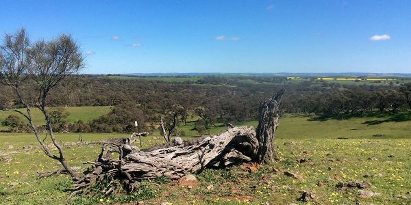 Michelle Ryan - Old Fallen Tree Scenery on the Lavender Federation Trail
